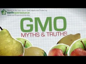 California at polls: GMOs will stay hidden